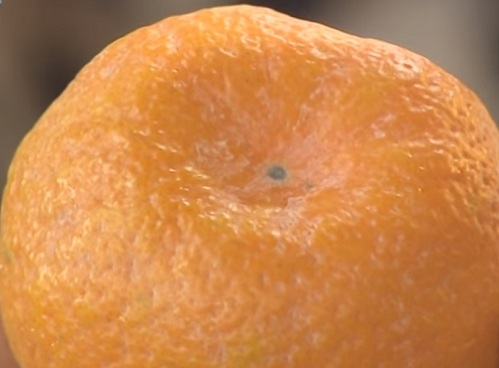 белый налет на мандаринах