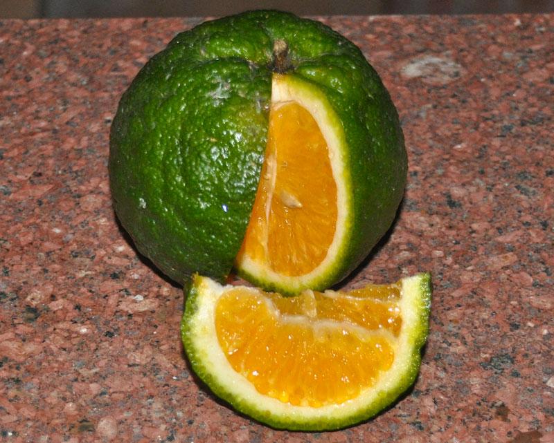 этилен, обработка мандарин