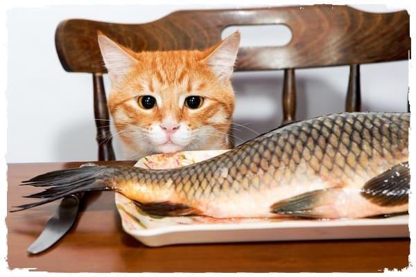 Описторхоз семь основных признаков заражения! Любителям рыбы читать обязательно