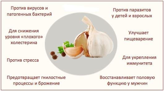 Основные свойства чеснока